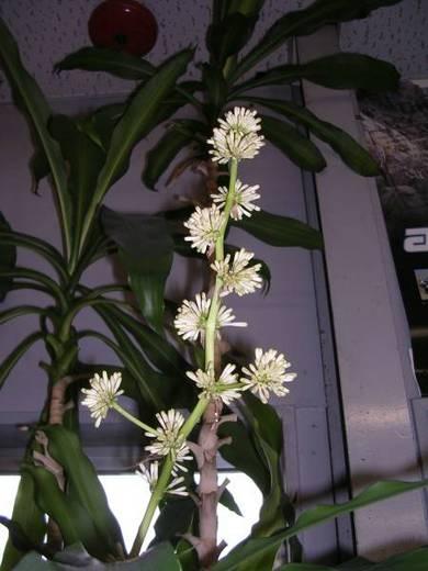 ホールショットの観葉植物
